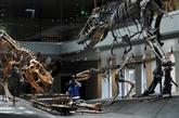 Les T-Rex adolescents ont évincé les espèces de dinosaures plus petites