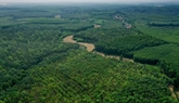 Édification dune base de données sur les arbres à léchelle nationale