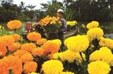 Le delta du Mékong à la saison des fleurs du Têt