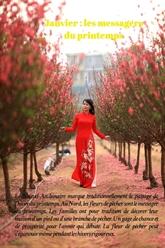 Les fleurs de Hanoï au gré des saisons