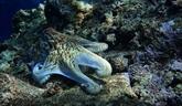L'ONU lance sa décennie d'action pour protéger l'océan