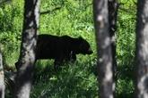 Le Conseil d'État retoque les mesures d'effarouchement des ours