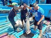 Binh Thuân lutte contre la pêche illicite