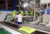 Le prix à l'exportation du riz vietnamien atteint un nouveau sommet