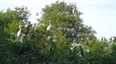 L'écotourisme au profit de la conservation des parcs des oiseaux à Cà Mau