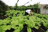 Des potagers verts à Truong Sa malgré les difficultés