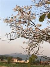 La beauté des fleurs du mois de mars