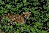 La COP15 sur la biodiversité se tiendra en octobre en Chine