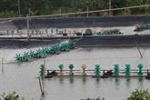 Construire une zone d'aquaculture pour l'exportation en aval de la rivière Tiên