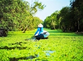 Cà Mau s'oriente vers l'écotourisme