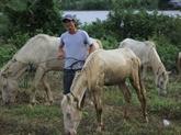 Une ferme de chevaux blancs sur les hauts plateaux du Centre