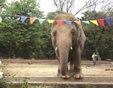 Le zoo d'Islamabad va se réinventer après le départ de l'éléphant Kaavan