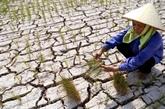 Changement climatique : Vietnam et États-Unis renforcent leur coopération