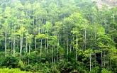 Plantation de près de 17.400 hectares de forêts en mars