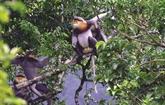 Des nounous au Parc national de Kon Ka Kinh
