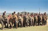 Mes souvenirs du Festival des éléphants