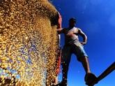 Le Brésil vers un nouveau record de récoltes céréalières
