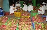 Belles perspectives des exportations de fruits et légumes grâce aux ALE
