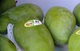 Pour mieux exporter des mangues vietnamiennes