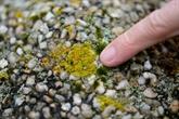 Les lichens, trésor scientifique et sentinelles de l'environnement
