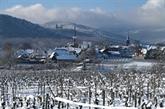 Au moins 2 milliards d'euros de manque à gagner pour la viticulture