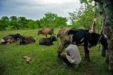 Cuba autorise pour la première fois les éleveurs à vendre de la viande