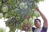 Intensifier la coopération vietnamo-américaine pour une agriculture responsable