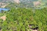 Le mécanisme de paiement du service forestier national génère 120 millions de dollars par an