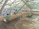 Bac Liêu veut devenir un centre de production de crevettes