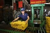 Binh Phuoc renforce sa production de caoutchouc grâce à la haute technologie