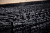Le gouvernement va activer le régime de calamité agricole