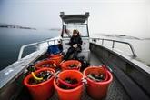 Dans les eaux glacées en Suède, une plongeuse unique en son genre