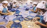 Les noix de cajou vietnamiennes dominent le marché turc