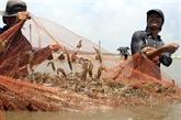 Cà Mau construit des zones rizicoles de haute qualité