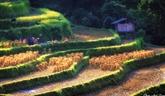 Les 11 sites touristiques les plus visités du Vietnam, selon DPA