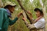 Cà Mau, une belle destination sur la carte touristique du Vietnam