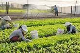 Hanoï : optimisation des coopératives pour une meilleure production