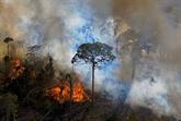 Déforestation : des dizaines de distributeurs menacent le Brésil de boycott