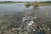 Dans les marais de Mésopotamie coulent... les égouts d'Irak