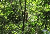 Quatre animaux sauvages relâchés dans le Parc national de Bù Gia Mâp