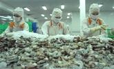 Les exportations de crevettes vers l'Australie multipliées par 1,6 fois