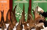 Remise à l'Afrique du Sud des cornes de rhinocéros saisies