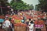 Malgré la pandémie, le litchi de Bac Giang pourra trouver preneur