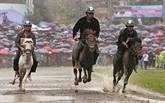 La course de chevaux de Bac Hà, nouveau patrimoine immatériel