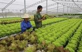 HCM-Ville vise l'objectif de 30% des coopératives agricoles de high-tech en 2030