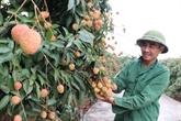 Les produits agricoles vietnamiens ont des atouts concurrentiels, selon Central Retail