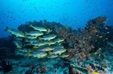 L'ONU appelle à affronter la crise des océans avec des solutions exploitables