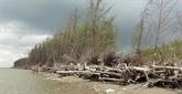 Bên Tre : la protection des mangroves associée au développement de la production