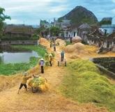 Pour et contre le village traditionnel