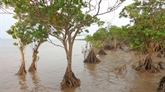 À la découverte de la mangrove de Dông Rui